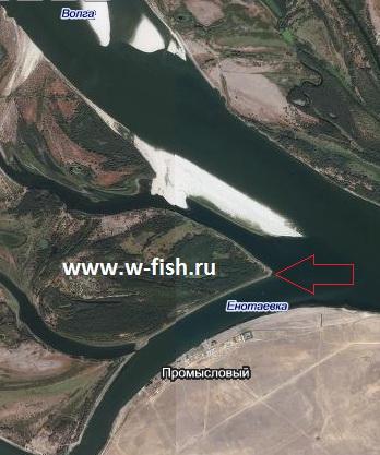 Рыбалка на Волге в Астраханской области: секретные места и полезные советы, Рыбная ловля на Волге